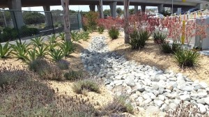 The storm-water runoff drains into numerous bioswales to irrigate plantings. (Photo by Delle Willett)