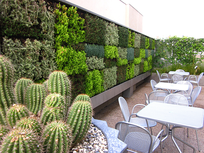 Living Walls at Thomas Jefferson School of Law (Courtesy Ground Level Architecture)