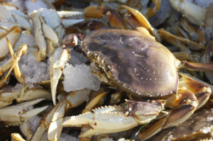 Bay Area crabs have made a comeback. (Google)